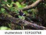 beautiful black and white bird  ...   Shutterstock . vector #519163768