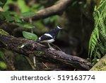 beautiful black and white bird  ...   Shutterstock . vector #519163774