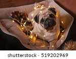 Stock photo christmas dog with garland in bed on christmas holidays 519202969