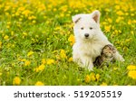 Stock photo puppy hugging a tabby kitten on a field of dandelions focus on cat 519205519