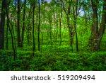 colorful summer landscape....   Shutterstock . vector #519209494