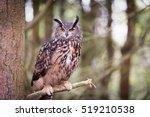 eurasian eagle owl | Shutterstock . vector #519210538