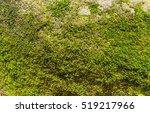 moss in forest  mossy rain...   Shutterstock . vector #519217966