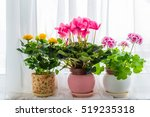 Three Potted Flower Stand On...