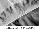 Black And White Banana Leaf...