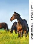 Horse Standing Against Herd On...
