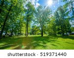 green lawn with trees in park | Shutterstock . vector #519371440
