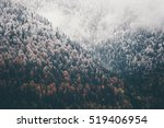 Foggy Autumn Coniferous Forest...