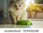 White Persian Cat Eating