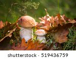 White Mushrooms In The Woods ...