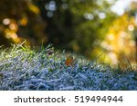 Frosted Grass In Autumn