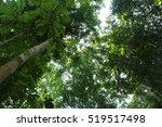 forest   Shutterstock . vector #519517498