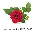 red rose flower on a white... | Shutterstock . vector #519518689