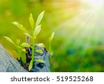 Small photo of Young seedlings growing on a stump and sun to sustain life.