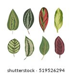 exotic tropical leaves. vintage ... | Shutterstock .eps vector #519526294
