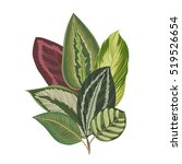 exotic tropical leaves. vintage ... | Shutterstock .eps vector #519526654