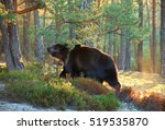 brown bear | Shutterstock . vector #519535870