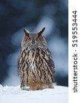 Big Eurasian Eagle Owl With...