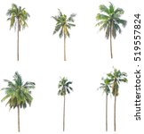 Small photo of coconut tree or palm tree collection isolated on white background