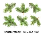 fir tree branch isolated on... | Shutterstock . vector #519565750