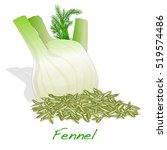 fennel root and seeds vector on ... | Shutterstock .eps vector #519574486
