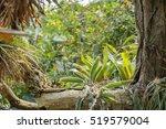 vivid scenery including lots of ... | Shutterstock . vector #519579004