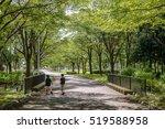 Scenery Of The Summer Promenade