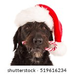 Black Dog In Santa Outfit And...