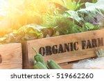fresh vegetable organic produce ... | Shutterstock . vector #519662260