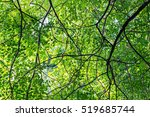 Green Leaf Background In Fores...