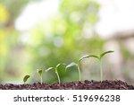 tree planting | Shutterstock . vector #519696238
