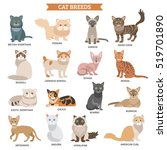 cat breed flat icons set with... | Shutterstock . vector #519701890