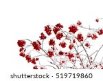 Branches Of Viburnum In Of...