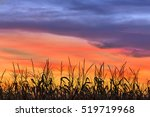 A Cornfield Is Silhouetted By...