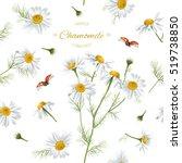 vector chamomile flower... | Shutterstock .eps vector #519738850