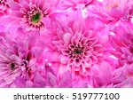 Close Up Of Pink Flower   Aste...