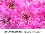 Close Up Of Pink Flower   Aste...