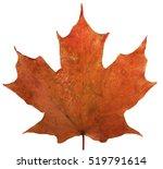 Single Maple Leaf 2