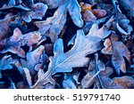 frosted abstract oak leafage  ... | Shutterstock . vector #519791740