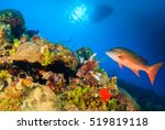 Small photo of Snapper and Lionfish