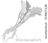 isolated horseradish root... | Shutterstock .eps vector #519827128