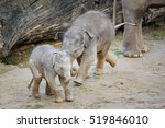 Two Cute Baby Elephants Playin...
