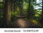Forest Hiking Path.