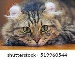 selective focus to american... | Shutterstock . vector #519960544