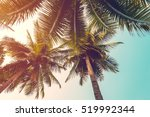 Coconut Palm Tree And Sky On...