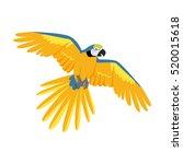ara parrot vector. birds of... | Shutterstock .eps vector #520015618