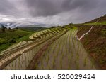 terraced rice field with mist ... | Shutterstock . vector #520029424