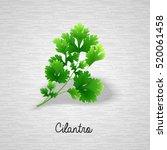 fresh green leaves cilantro.... | Shutterstock .eps vector #520061458