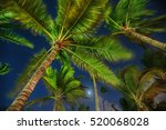 Coconut Palm Trees Perspective...