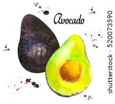 watercolor green fresh avocado. ... | Shutterstock . vector #520073590